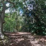 My Woodland Walk with Vocal Sound Healing
